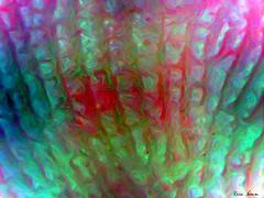 Corporeal Abstract #1 (nomm de photo) Tags: art bodyart micrograph microscopicart abstractart micrographs reinnomm digitalpainting