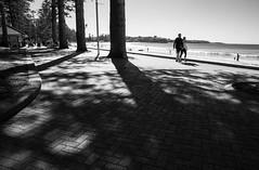 Manly shadows (LSydney) Tags: shadows beach trees manly manlybeach bw blackandwhite
