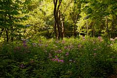 DSC_0115_DxO (mwnaber) Tags: flowers caesar creek gorge