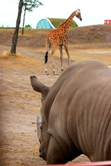 IMG_0814 (Bob_lewerissa) Tags: wildlands emmen zoo canon 80d 70200 l nonis usm