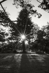 Sun Tree (frntprchprss) Tags: hermit hermitisland tree beach sun nature jamesgehrt blackandwhite