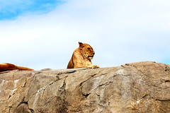 IMG_0739 (Bob_lewerissa) Tags: wildlands emmen zoo canon 80d 70200 l nonis usm