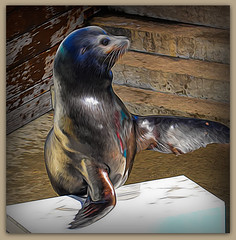 The day is what you make it! So why not make it a great one?  (Steve Schulte)  ** Explored ** (boeckli) Tags: tarongazoo zoo sydney australia newsouthwales animal animals tiere outdoor aquatic topaz topazstudio textures texturen texture textur photoborder painterly whiskers rx100m6 000935