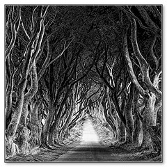 The King's Road (Oul Gundog) Tags: dark hedges kings road game thrones gracehill beech trees walk tourist attractions co antrim northern ireland ulster