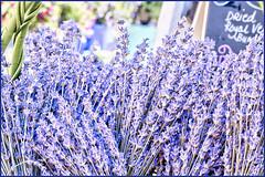Lavender (ScottElliottSmithson) Tags: purple lavender canon eos eos7d 7d dtwpuck scottsmithson scottelliottsmithson smithson oregon albany farmersmarket pacificnorthwest northwest photomatix colorful macro produce market saturdaymarket albanysaturdayfarmersmarket