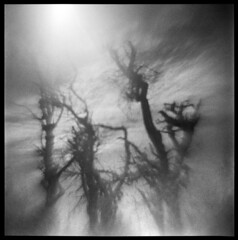 Oregon Coast #4 (LowerDarnley) Tags: agfaisoly modifiedcamera transplantedlens holgalens flippedlens oregoncoast oregon pacificocean baretrees branches northwest