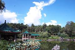 SDIM0126 (LZ775) Tags: sigma 1750mm sd1m 適馬 适马 康樂公園 honglokpark fanling 粉嶺 岭 香港 新界 hongkong newterritories x3 foveon