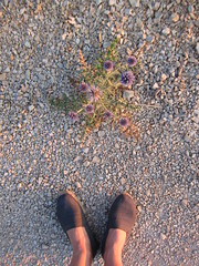 thistle & rope (Ladybadtiming) Tags: summer evening light gold bliss sweet rope shoes espadrilles thistle blue