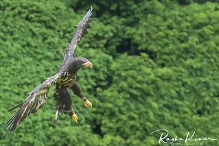 Wildlife @ Warwick, England