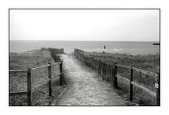 Vers la plage (stéphanemarco) Tags: bretagne audierne leica iiif 5cm summicron collapsible film ilford fp4 id11