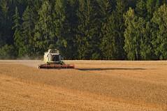 DSC_0333 (anetaležáková) Tags: summer sunset summerharvest sunnydays harvest agriculture agriphoto czechagri caseihpuma case casepuma165 caseoptum casepuma200 claas claaslexion newholland