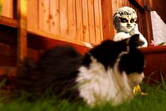 Bad influences / Malas compañías. (jaime.tomizawadealmagro) Tags: animal pet mascota cat gato angel ángel garden jardín evil maligno