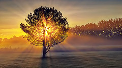 Lone Tree In Misty Sunrise P1090208-10 (salinasattar9) Tags: lone tree misty sunrise smiths falls ontario canada