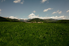 Herd (ondro666) Tags: clouds forest grass green hills mountains nature rural sheep sheeps sky slovakia tree trees dolnálehota banskábystricaregion