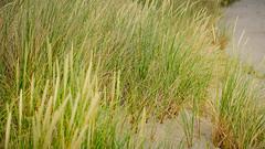 Tag 24 (2) (uwesacher) Tags: feld gras sand strand ostsee düne