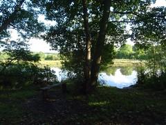 A seat in the shade (Phil Gayton) Tags: water tree grass sky foliage scenery shade seat bench riverside walk snipe island river dart totnes devon uk cloud reflection