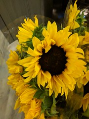 Grocery Store Sunflower (earthdog) Tags: 2018 flower shopping sunflower plant safeway grocerystore store googlepixel pixel androidapp moblog cameraphone