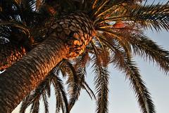 DSC_8278 (SaYuMi-87) Tags: natura nature naturalistica verde mare isola green sea island menorca minorca baleari baleares spain spagna travel viaggio vacanze holydays summer estate 2018 july luglio august agosto sonbou spiaggia spiagge beach blu acqua blue water arenasdesonbou alajor