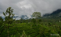 Tea plantations in Sri-Lanka (stefanfaustphotography) Tags: srilanka teaplantations tea clouds nature landscape travel travelling vacation nikon