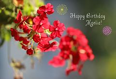 Birthday Wishes For Maelia! (Through Serena's Lens) Tags: bright closeup canoneos6dmarkii dof bokeh red lantana flora flower tribute happybirthday 7dwf