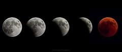 Lunar eclipse 27/7/2018 (Ziad Hunesh) Tags: zhunesh moon totallunareclipse lunareclips longexposure night sky bloodmoon canon sx50hs astrophotography qatar doha