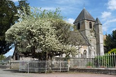 L'aubépine de Bouquetot (Philippe_28) Tags: bouquetot eure 27 normandie normandy aubépine crataegus oxyacantha france europe arbre remarquable awesome tree hawthorn