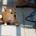 Amanda Anisimovas Dog