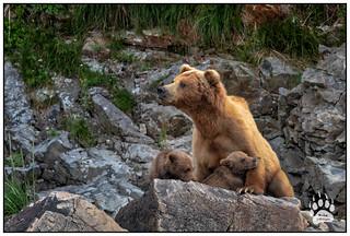 Katmai Bears 082418-0037-W.jpg