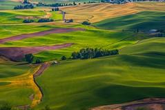 enjoying the Palouse view.IMGP4986 (candysantacruz) Tags: washingtonstate palouse summer wheatfields viewfromsteptoebutte steptoebutte evening