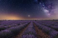 Bajo las estrellas. (Amparo Hervella) Tags: guadalajara españa spain lavanda víaláctea estrella naturaleza puntodefuga noche nocturna largaexposición d7000 nikon nikond7000