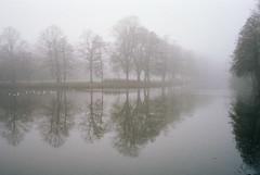 foggy reflections (rohabecker) Tags: leicam2 leitzsummaron2835mm kodakportra160 meinfilmlab film analogue wilhelmshaven landscape landschaft spiegelung reflection trees bäume fog nebel