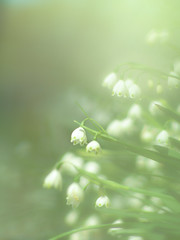 Can you hear faint tinkling of bells? (Tomo M) Tags: summersnowflake スズランスイセン snowflake white flower bokeh blur haze outdoor spring green soft dreamy pastel