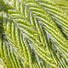 Kastanjeblad (Walter Johannesen) Tags: kastanjeblad kastanje blad leaf chestnut