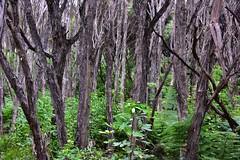 Grey and Green (Harald Philipp) Tags: newzealand picton ferns nikon d810 bark trunks