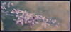 Floral, Andromeda Gardens (http://www.aimonephoto.shop) Tags: cyanotype gumbichromateovercyanotypeoverna2platinumpalladium lensbabyvelvet56 sonya7rii safe
