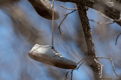 Shoes-48800.jpg (Mully410 * Images) Tags: hastings sneakers tennisshoes tree minnesota shoes