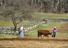 The Family That Plows Together... (Chancy Rendezvous) Tags: plow plowing plough ploughing field agriculture farm farming osv osvorg oldsturbridge village trees fields planting farmer oxen