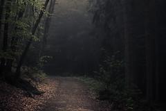 On my Way (Netsrak) Tags: baum bäume europa europe forst landschaft natur nebel wald fog forest landscape mist nature tree trees woods eifel