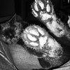 """""""Criticism of others is thus an oblique form of self-commendation."""" ―Fulton J. Sheen 🐈 (anokarina) Tags: appleiphonese 🐈 highlands louisville kentucky ky monochrome bw blackwhite grey grayscale paws feet blackcat cat kitten kitty animal pet"""
