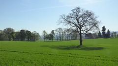 Rheinermark (erix!) Tags: landschaft landscape meadow weide trees bäume iserlohn rheinermark countryside germany sauerland