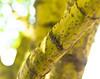 Tree Branch Textures (Orbmiser) Tags: kfconceptlensmountadapternikonglenstomicro43 nikkor28105mmf3545d nikonlens omdem1 manual olympus oregon portland m43rds tree branch texture bark