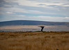 THE SINGING RINGING TREE (Laineyb93) Tags: panopticons burnley lancashire loveyournikon landscape moorland nikond7000 skyscape cloudscape cloudysky midpenninearts