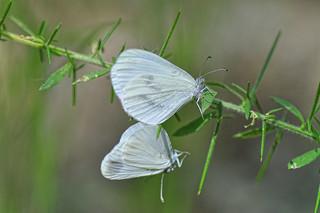 Love of butterflies