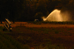 We all need water. (alex.vangroningen) Tags: water spray goldenhour trees colors wood england hose wire fence