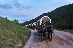 Caravan of Love (Drunkphotography.com) Tags: bart5 otisdupont usa drunkphotography drunkphotographycom blogdrunkphotographycom oatografiagmailcom jackson jacksonhole wyoming cowboy country side carvan horses trails mountains sky dawn wrapping travelphotography oatografia sonya6000 sonya6300 sonyrx100v road forest people coveredwagon prairieschooners oldwest westernlife cowboylife duderanch