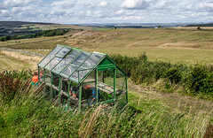Greenhouse with a view. . . (CWhatPhotos) Tags: cwhatphotos photographs photograph pics pictures pic picture image images foto fotos photography that have which with contain mk digital camera lens micro four thirds olympus ep5 pen 17mm prime f18 northumberland north east england uk ridsdalew countryside outdoor green nature view greenhouse house flickr