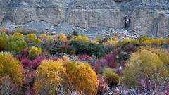 Ladakh in Autumn (pallab seth) Tags: landscape autumn fall nature colour highway kashmir india ladakh nubravalley valley jammukashmir color mountains himalayas