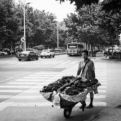 Mr Grapes (Go-tea 郭天) Tags: qingdao shandong farmer man poor business duty busy alone lonely portrait fuits grapes fresh crossing cross zebra wheelbarrow heavy sale saler full plenty hot sun sunny shadow summer street urban city outside outdoor people candid bw bnw black white blackwhite blackandwhite monochrome naturallight natural light asia asian china chinese canon eos 100d 24mm prime huangdao sidewalk transport transportation hard