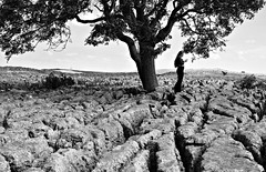 Rock and stick (plot19) Tags: love light landscape liv life britain british blackwhite plot19 photography portrait people yorkshire dales limestone rock stick family daughter teenager olivia trees tree uk england english nikon north northern