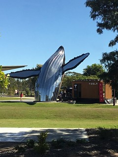 Hervey Bay. 400 or more whales play in Wide Bay between Hervey Bay and Fraser Island each year from July to November. Hervey Bay has this fine sculpture of a whale.